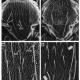 Musashi in stem cells figure